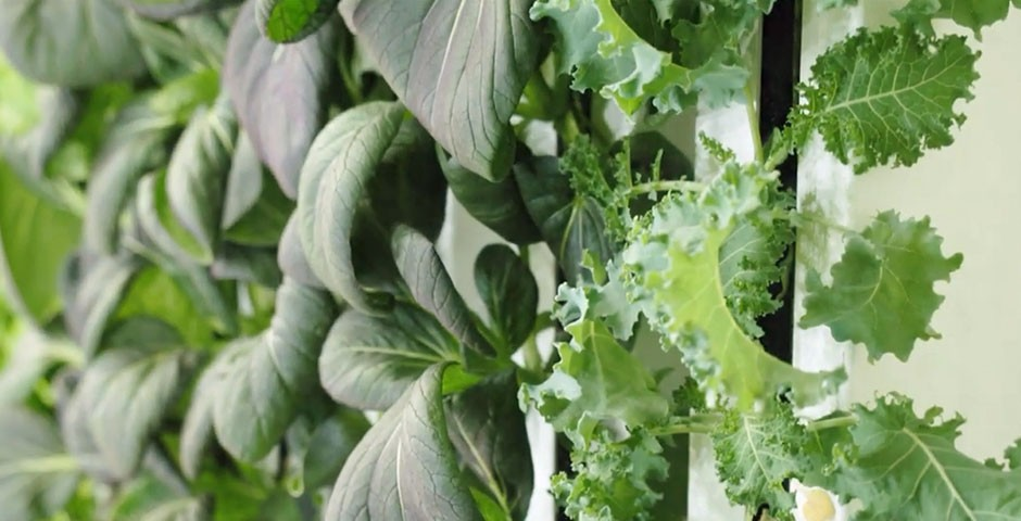 Coltivazione di verdure